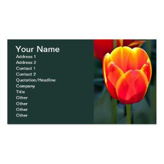 Fleur rouge et jaune lumineuse de tulipe sur le carte de visite standard