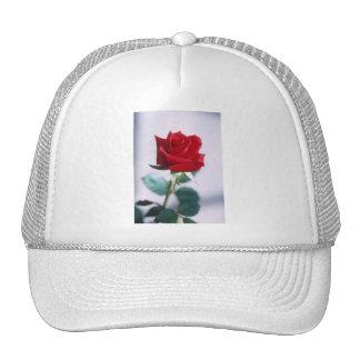 Fleur simple de rose rouge casquette de camionneur