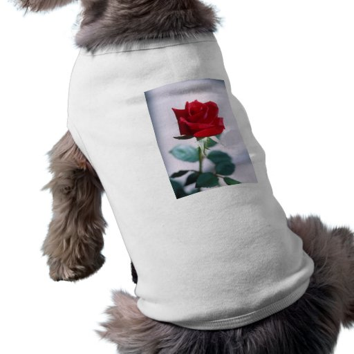 Fleur simple de rose rouge tee-shirts pour animaux domestiques