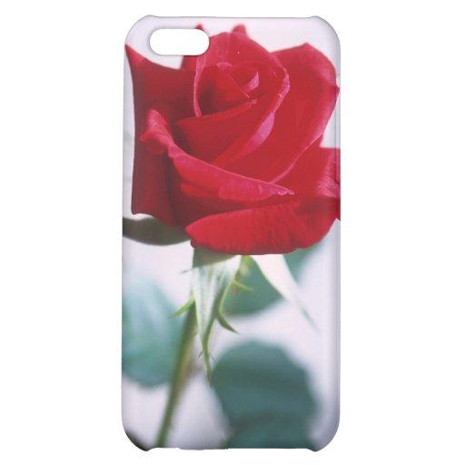 Fleur simple de rose rouge étui iPhone 5C