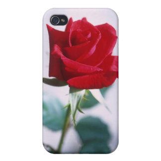 Fleur simple de rose rouge étuis iPhone 4