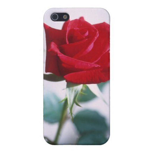 Fleur simple de rose rouge coque iPhone 5