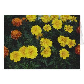 Fleurs dans Woodstock, NY Carte De Vœux