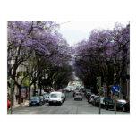 Fleurs de pourpre de Lisbonne Carte Postale