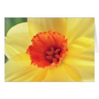 fleurs jaunes de Jonquil Cartes