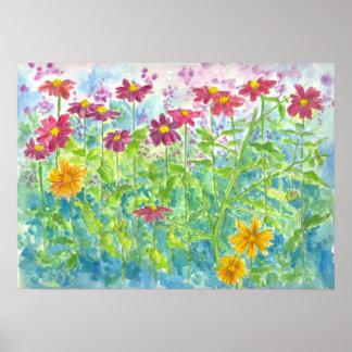 Fleurs roses d'aquarelle de jardin de marguerite poster