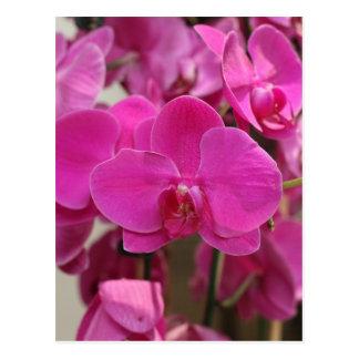 Fleurs roses d'orchidée carte postale