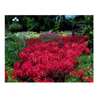 Fleurs rouges dans le jardin anglais carte postale