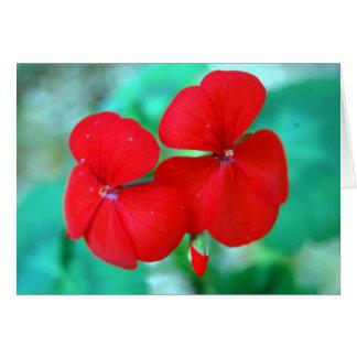 Fleurs rouges de géranium carte