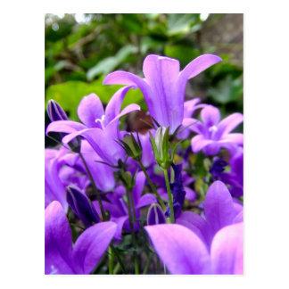 Fleurs sauvages lilas fraîches renversantes carte postale