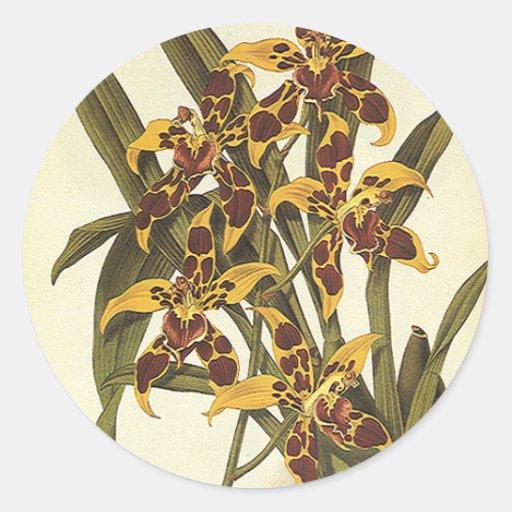 Fleurs vintages, orchidée tropicale autocollant rond