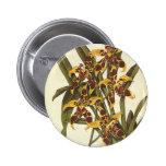 Fleurs vintages, orchidée tropicale d'Odontoglossu Pin's