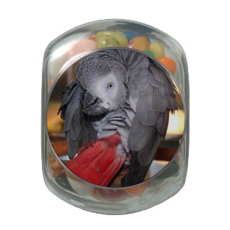 Flexible Congo African Grey Parrot with Red Tail