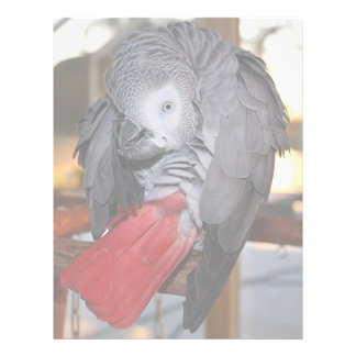 Flexible Congo African Grey Parrot with Red Tail Customized Letterhead