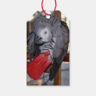 Flexible Congo African Grey Parrot with Red Tail Pack Of Gift Tags