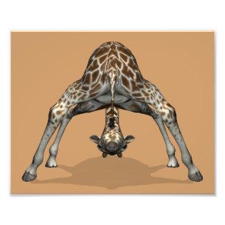 Flexible Giraffe Photo Print