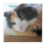 Flirty Calico Cat Tiles