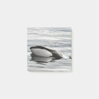 Flirty Orca Calf Post-it-notes Post-it Notes