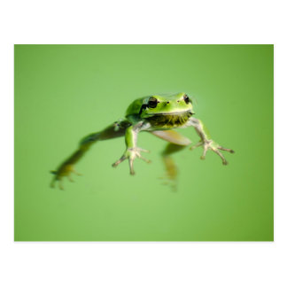 Floating frog in transparent and calm water . postcard