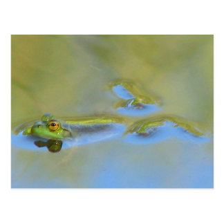 Floating Frog Postcard