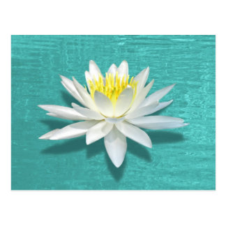 Floating Lily on Aquamarine Ripples Postcard