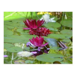 Floating Lotus Postcard