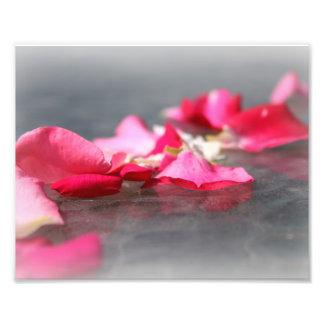 "Floating Pink Rose Petals on ""Water"" Closeup Photo"