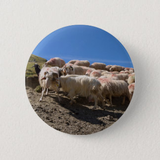 Flock of Basco Bearnaise Sheep at Arbaze Mountain 2 Inch Round Button