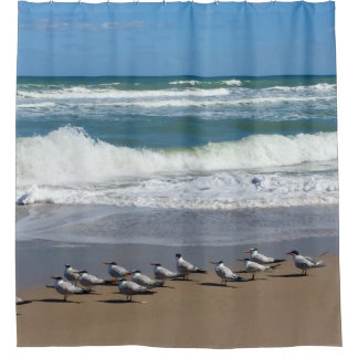Flock of Beach Birds