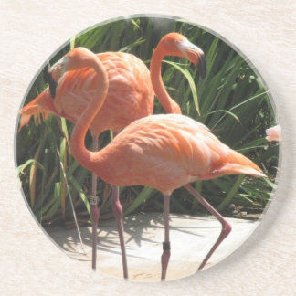 Flock of Flamingos Coaster