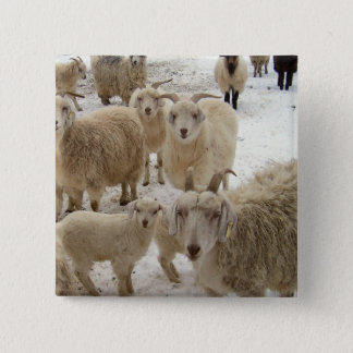 Flock of Goats 2 Inch Square Button
