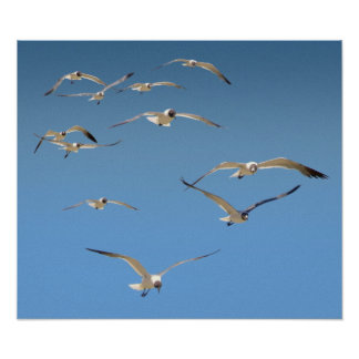Flock of gulls poster