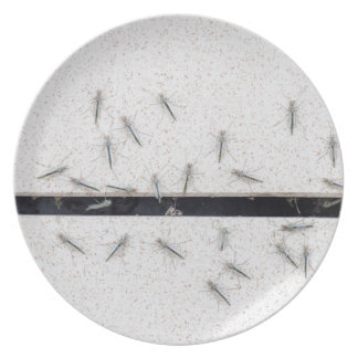 Flock of mosquitoes that enter the room plate