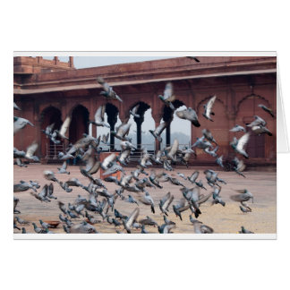 Flock of pigeons card