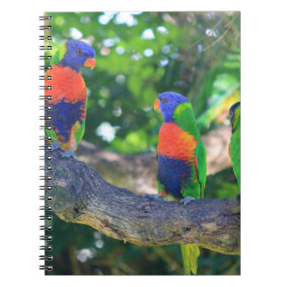 Flock of Rainbow lorikeets on a branch of a Tree Spiral Notebook