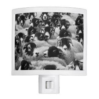 Flock of Sheep Black and White Nite Light