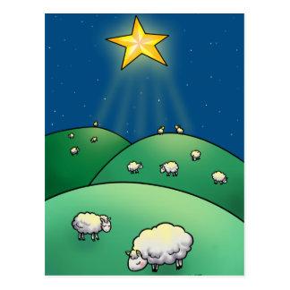 Flock of sheep under Christmas Star Postcard