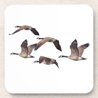Flock of wild geese coaster