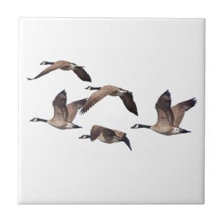 Flock of wild geese tile