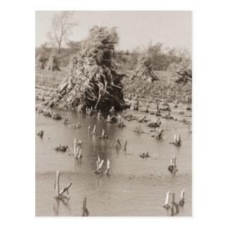 Flooded Corn Field Postcard