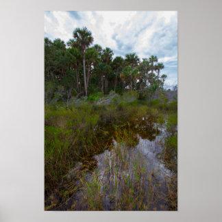 Flooded Trail & Hammock, Kissimmee Prairie, FL Poster