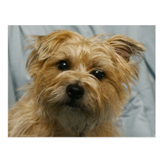 floppy eared terrier postcard