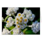 Flora on Grand Manan, NB Card