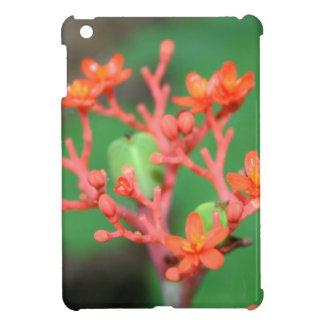 Flora - Red Flower Euphorbiaceae HD iPad Mini Cover
