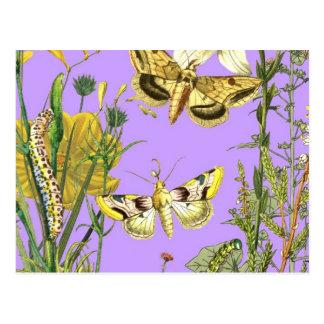 Floral Botanical Butterfly Illustration Postcard