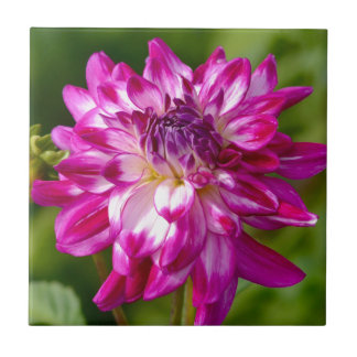 Floral Burst Tile