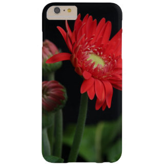 Floral Case, Red Gerbera Daisy on Black Barely There iPhone 6 Plus Case