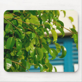 floral collection. Cyprus Mouse Pad