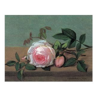 Floral Fine Art Pink Rose Postcard