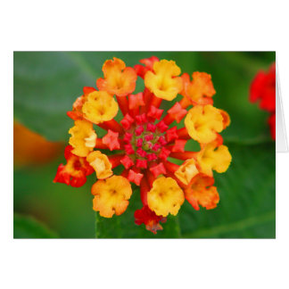 Floral Fireworks Note Card